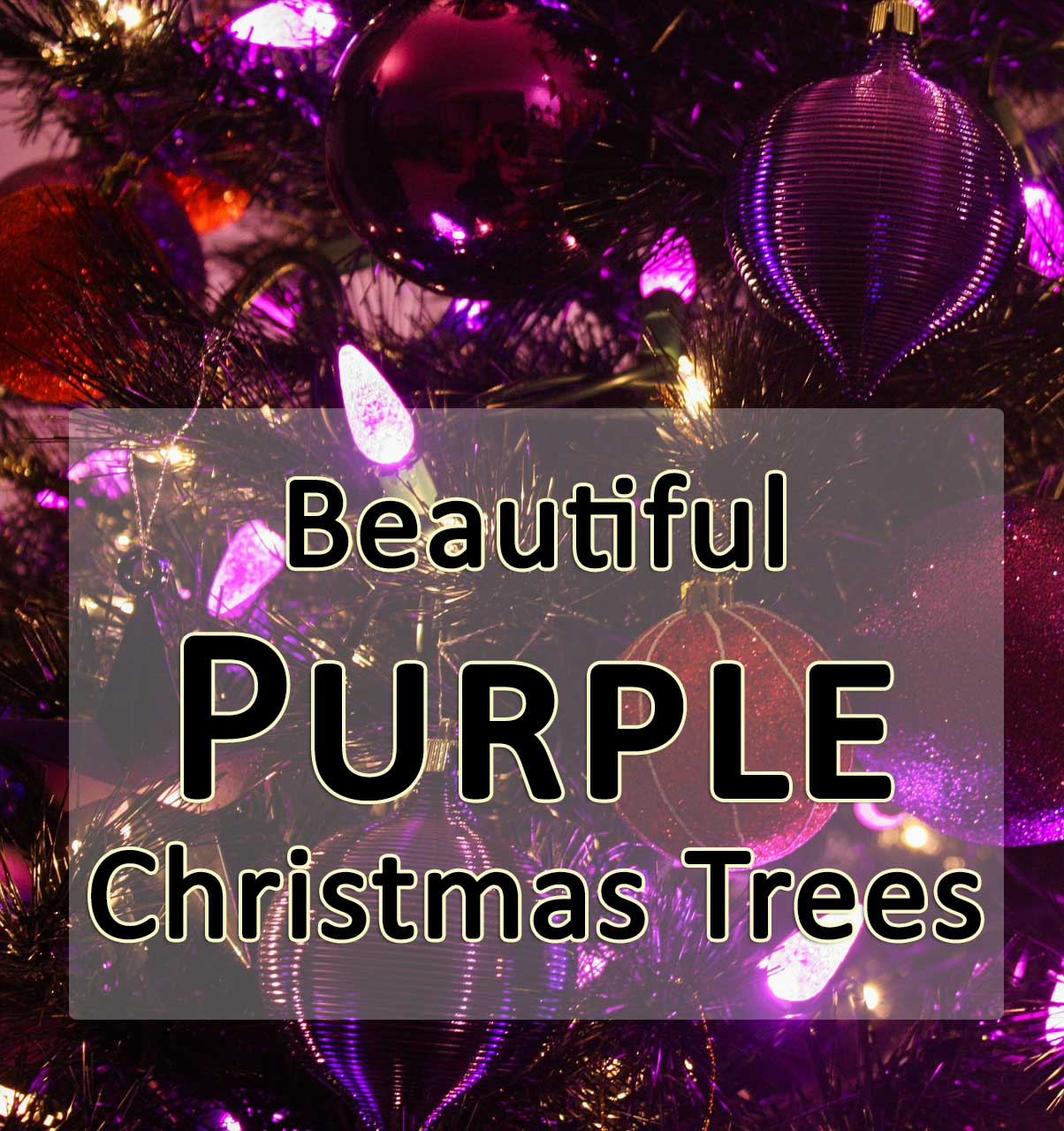 beautiful purple christmas trees